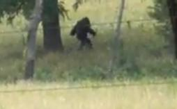 kansas-bigfoot-picture-102011d-254x157